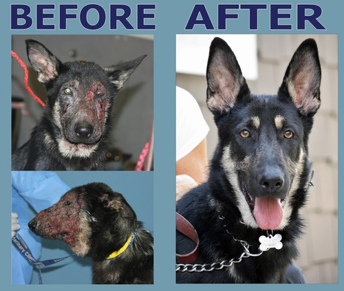 Mandy_Before_After2