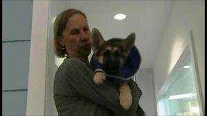 """Robin:  A Documentary"" - the story of Westside German Shepherd Rescue"